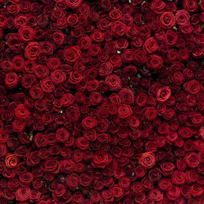 pozadi cervene kvetiny